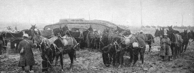 Horses and tanks at Monchy le Preux, April 1917