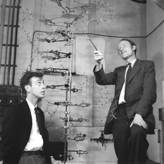 watson crick and the structure of dna Dna structure watson and crick i and it was at one of those symposia-- this was the year that they discovered the structure of dna and there was watson.