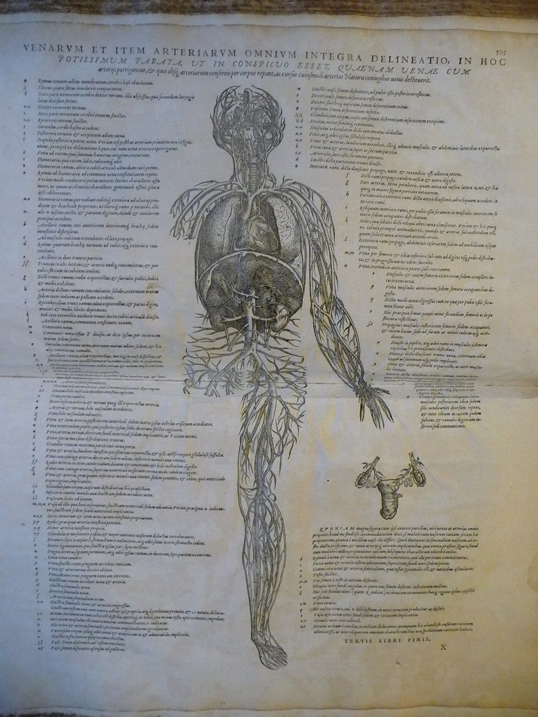 A page from 'De humani corporis fabrica' (The fabric of the human body) by Andreas Vesalius showing an illustration of the veins in the body.