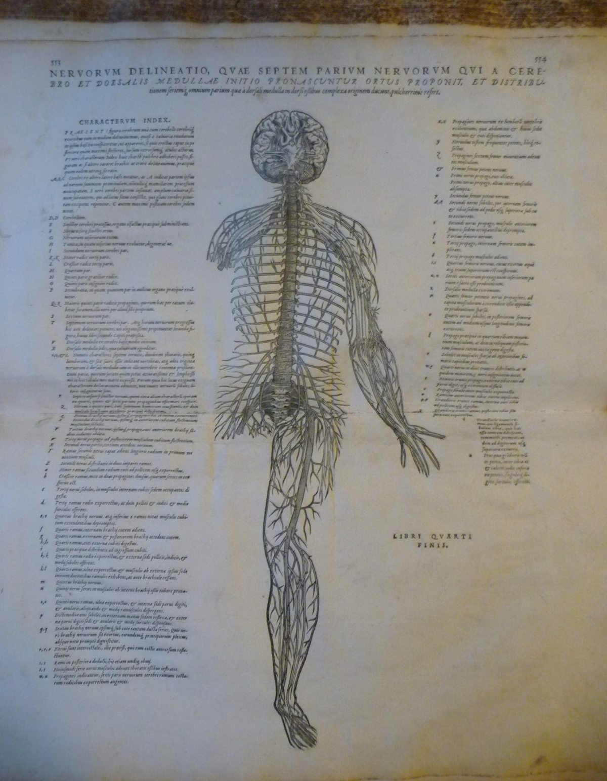 A page from 'De humani corporis fabrica' (The fabric of the human body) by Andreas Vesalius showing an illustration of the nerves in the body.
