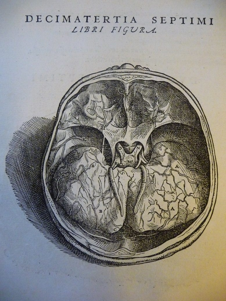 A page from 'De humani corporis fabrica' (The fabric of the human body) by Andreas Vesalius showing a cross section of a skull.